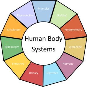 Human Body Systems Wheel