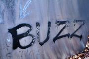 Buzz by David McCammon