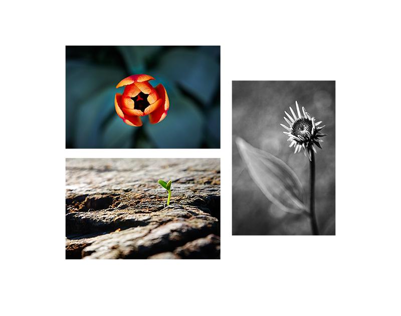 Spring flower photographs