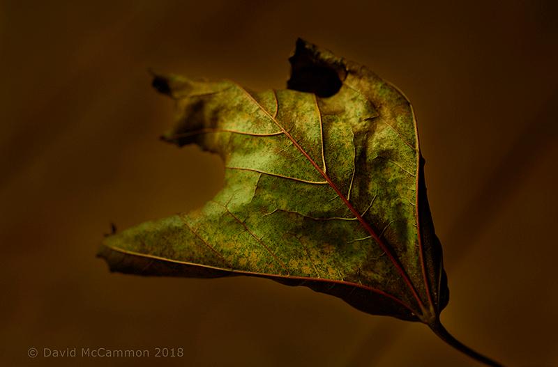 Rising Leaf Fall Photograph by David McCammon