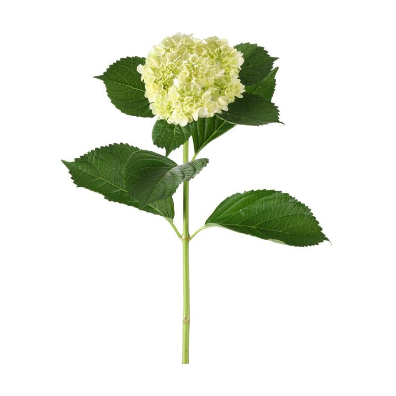 Bouquete-White