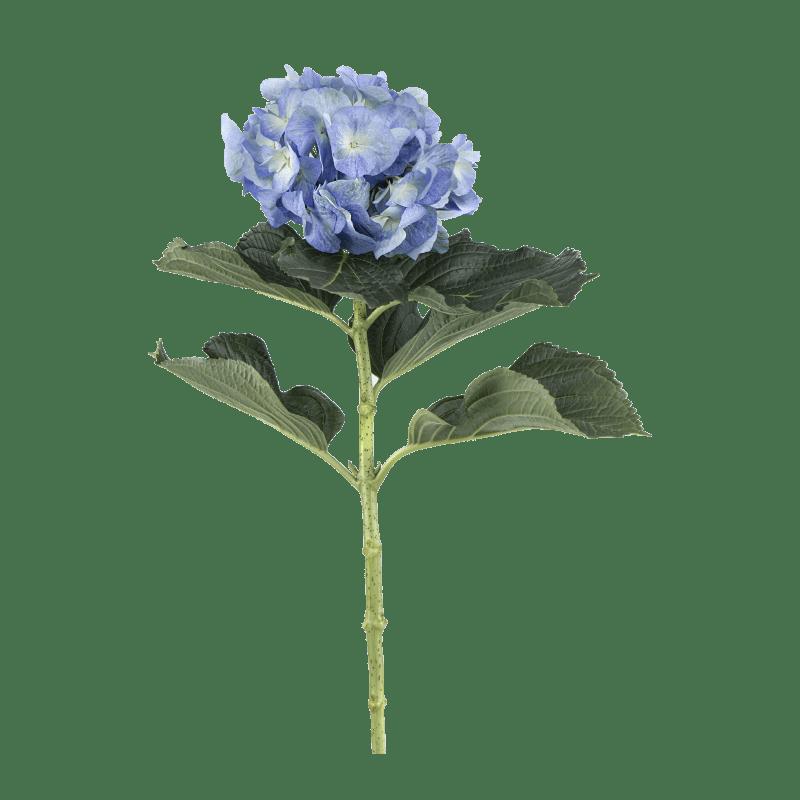 Blue-Big-Petal