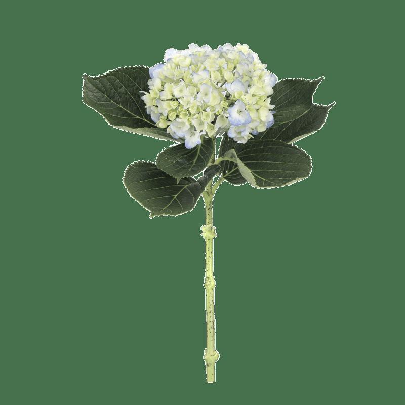 Bouquet-Blue