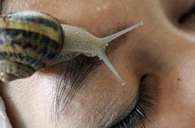Làm đẹp bằng ốc sên ở Thái Lan