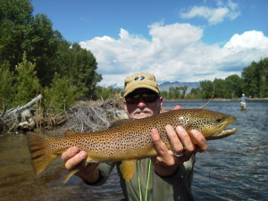A healthy Big Hole River brown trout.