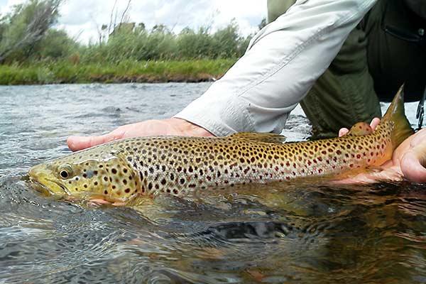 best fly fishing in montana