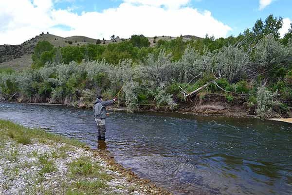 best fly fishing in montana
