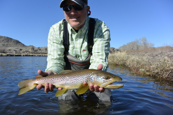 A large and beautiful Big Hole River brown trout