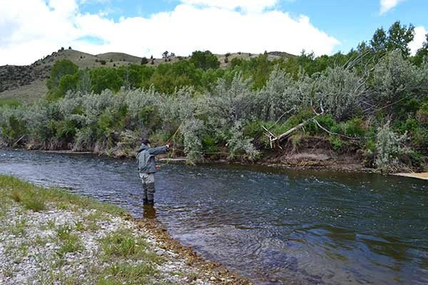 Ruby River fishing report