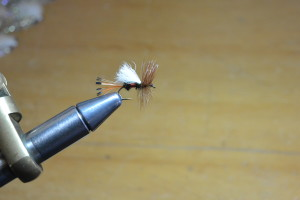 A Royal Trude dry fly.