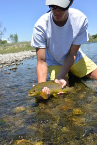 Madison-river-brown-trout-flyfishing