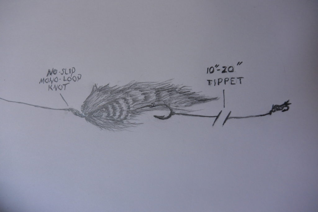 Drawn diagram of the streamer and beadhead rig.