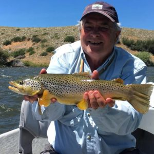 A healthy Madison river brown taken on the big dry!