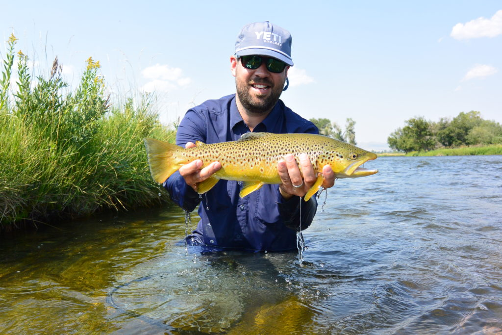 A healthey brown trout from the Madison River