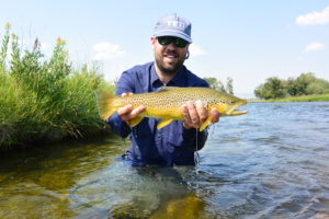 A healthy brown trout from the Madison River