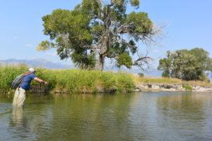 Casting hopper's on Montana's Ruby River.
