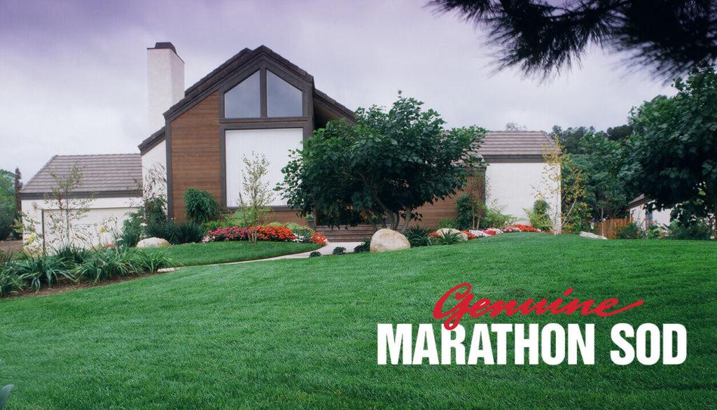 Genuine Marathon Sod