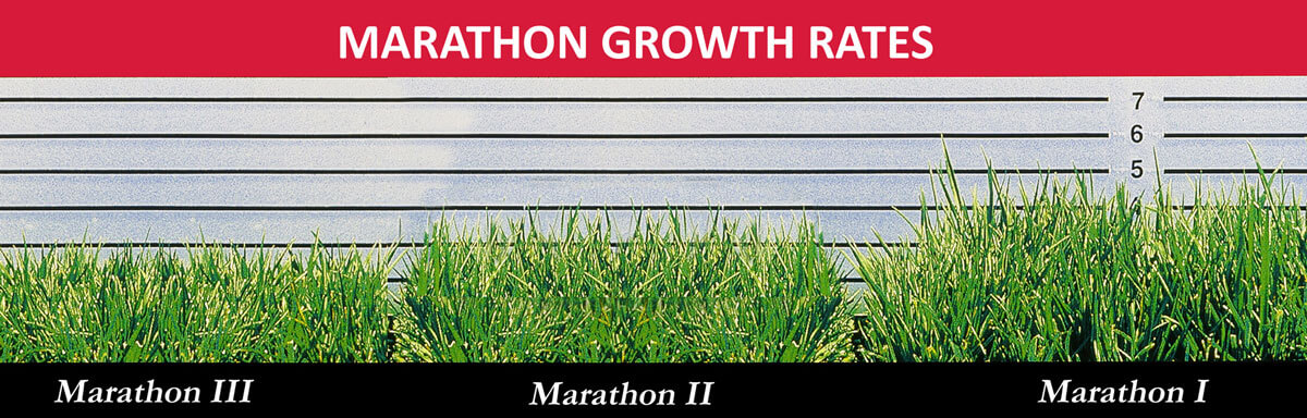 Marathon Sod Rate of Growth