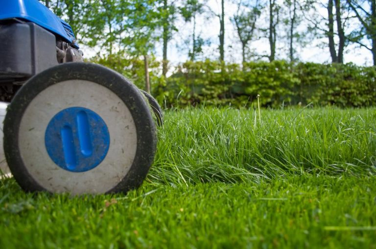 Sod care and maintenance