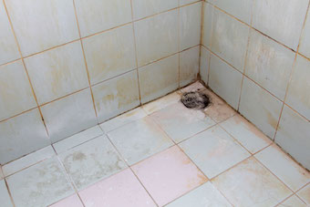 clean mould in bathroom