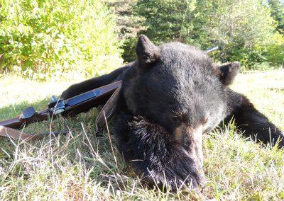 Killed Black Bear