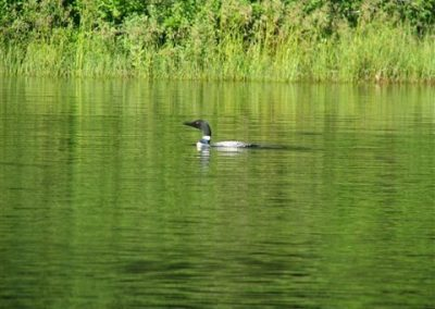 fishing trip with loons in Ontario