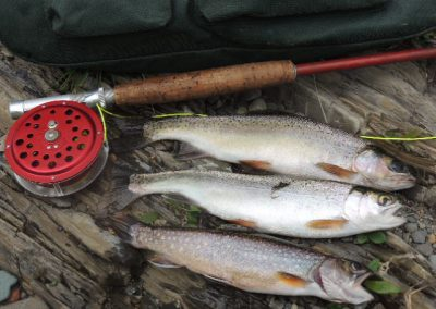 trout on flyrod northern ontario