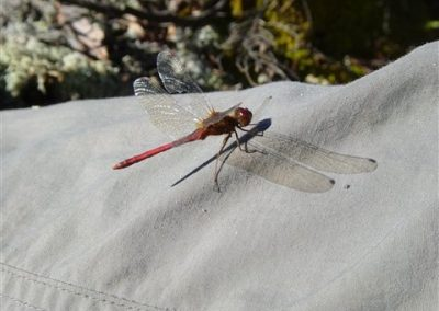 insects of ontario