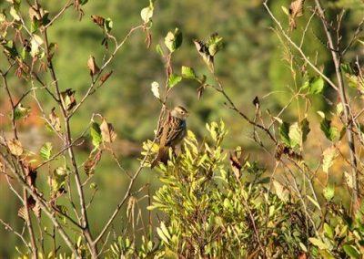 bird in alders