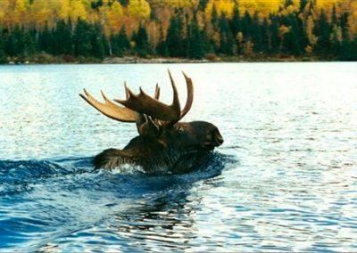 moose hunting trips in Ontario