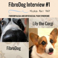 FIBRODOG INTERVIEW #1: LILY THE SUPPORT CORGI medeakarrfnp.com alifewellred.com