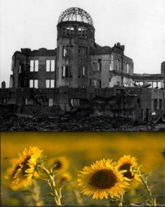 3-sunflowers