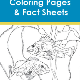 Kelp Forest Coloring Pages & Fact Sheets