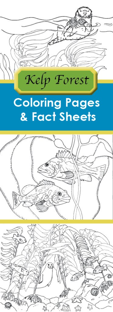 kelp_forest_coloring_sheets