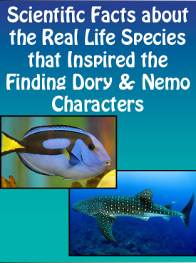 scientific facts about Dory Characters