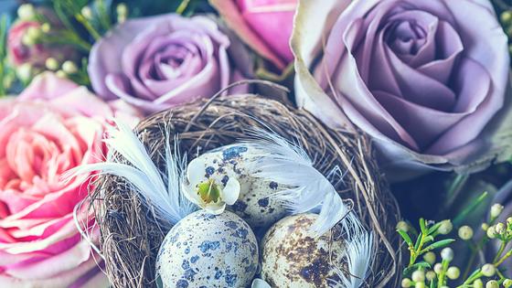 Egg Donor Testing Basics for Egg Donors