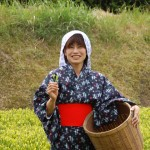 Girl harvesting tea