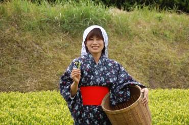 4 Ways to Harvest Tea in Japan