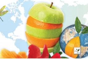 Wellness Spa Teas One World Herbal