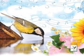 Wellness Spa Teas Perfect Harmony