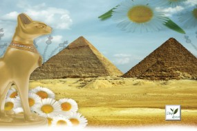 Wellness Spa Teas Pharaoh's Chamomile Herbal Tea