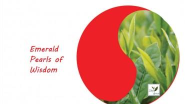 Stay Energized Functional Tea – Matcha