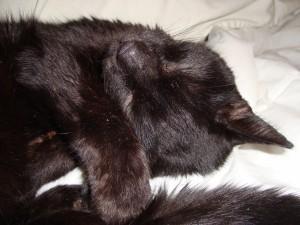 Beau the cat 031