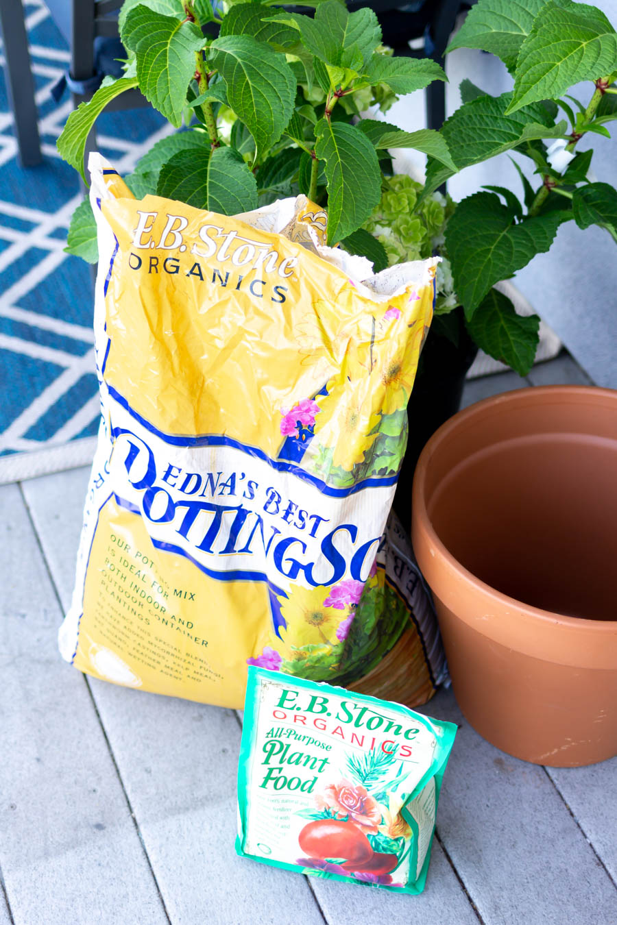 How to grow hydrangeas in a pot | A Married Adventure