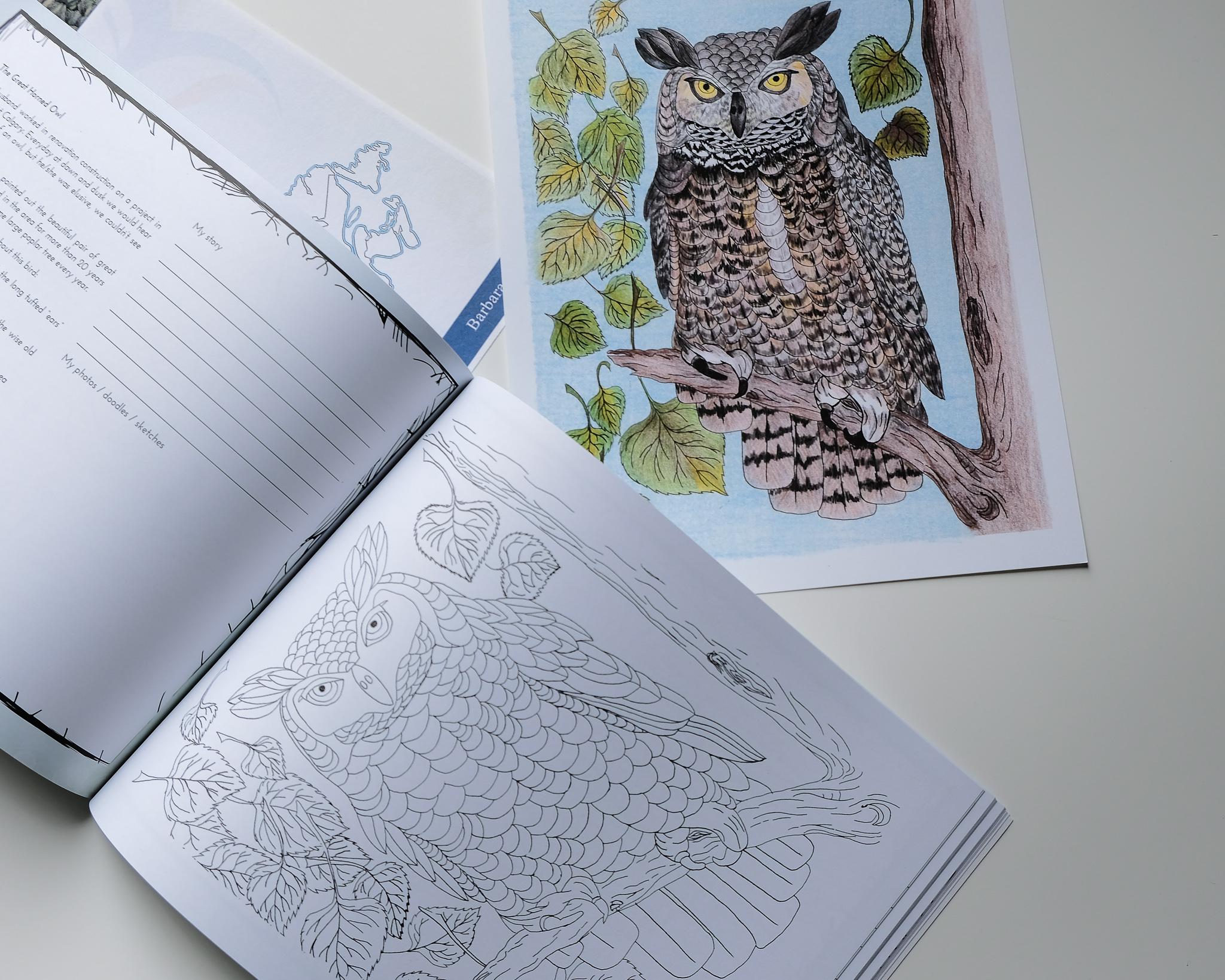 Alberta Owl - Sights of Canada