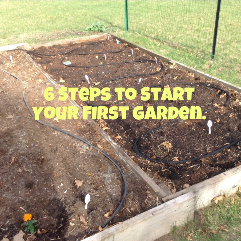Title six steps to start your first garden