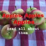 Apples, Apples, Apples- Read All About Them and Recipes
