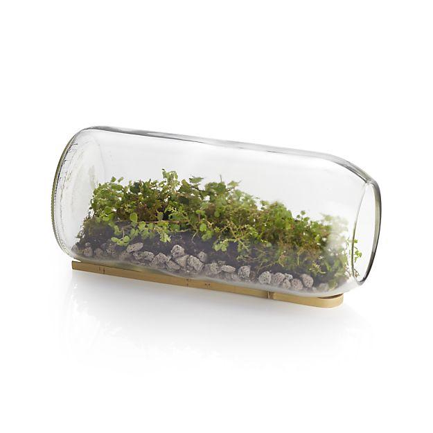 moss-and-sedum-terrarium