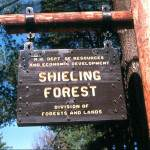 Shieling Forest