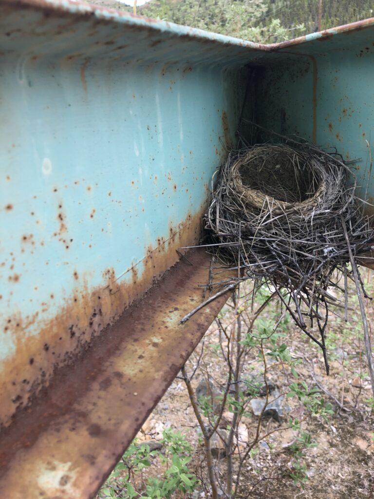 Nest Photo Taken During Wildlife Assessment 2019
